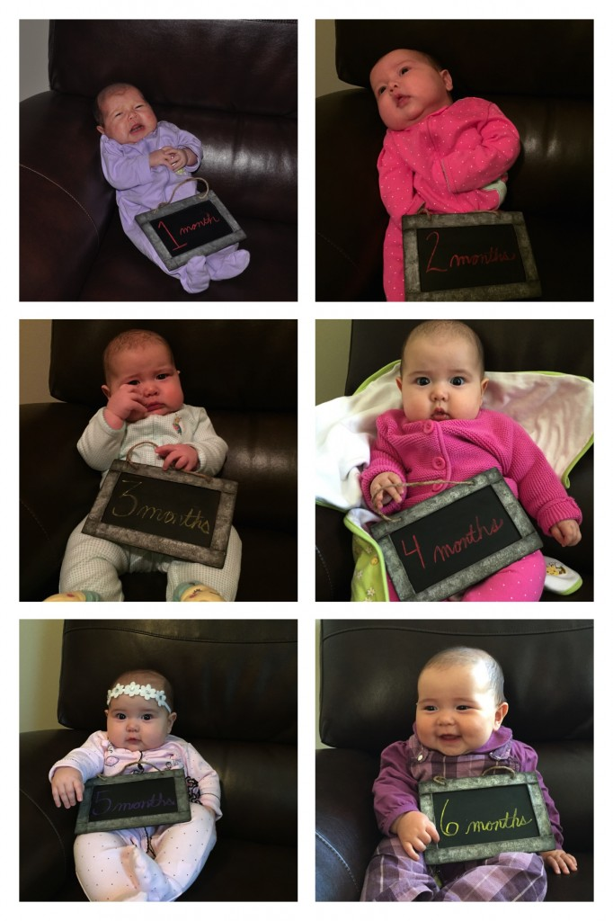 harlow 1-6 month